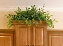 Fern on Top of Cabinet