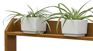 Spider Plants on Potting Bench Shelf